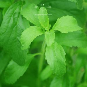 stevia növény nem dobja meg az inzulinszintet