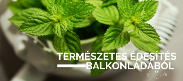 Stevia: Édesítő hatású fűszernövény, ami a balkonládában is megél