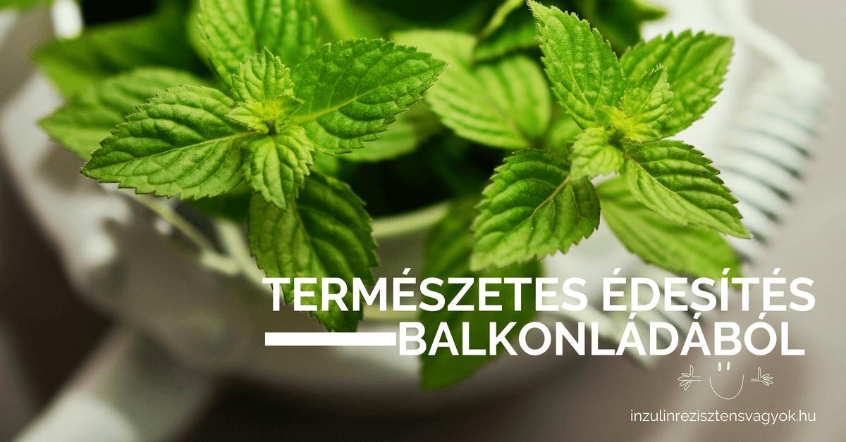 természetes édesítés balkonládából stevia